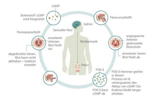 Einfluss von Sildenafil auf die Erektion